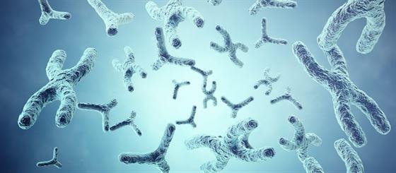 O que são cromossomos