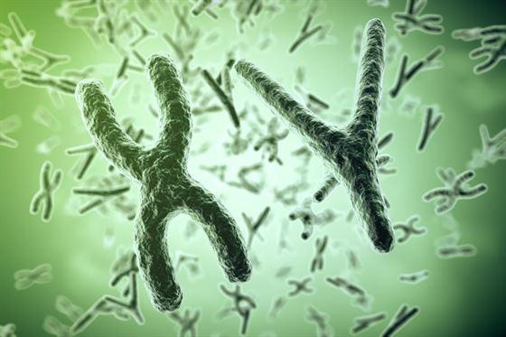 Qual é a teoria cromossômica da herança