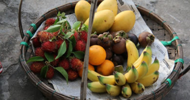 Frutas que o cachorro pode comer