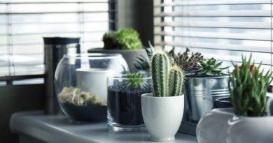 como ganhar dinheiro com jardinagem e plantas